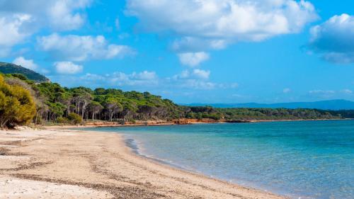 Primo piano della spiaggia di Mugoni, acqua trasparente, la pineta omonima alle sue spalle in lontananza